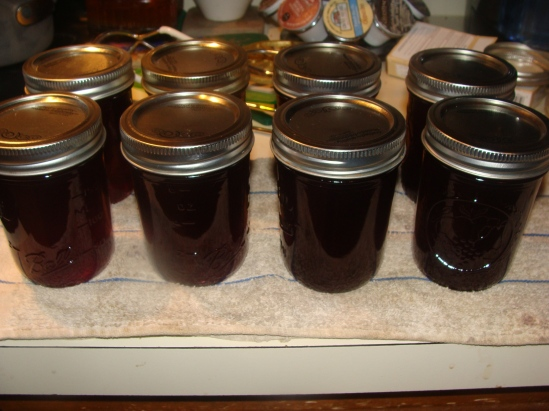 Eight 1/2 pints of muscadine jelly